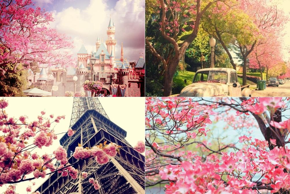 fotos-primavera3